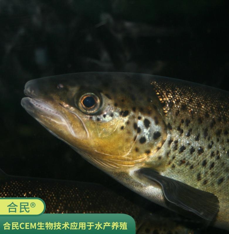 北京合民牌生态液