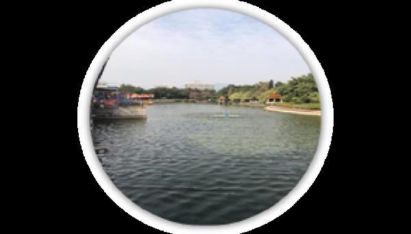 合民牌水体提质液WEI-SL型在广东清远中山公园内湖治理案例