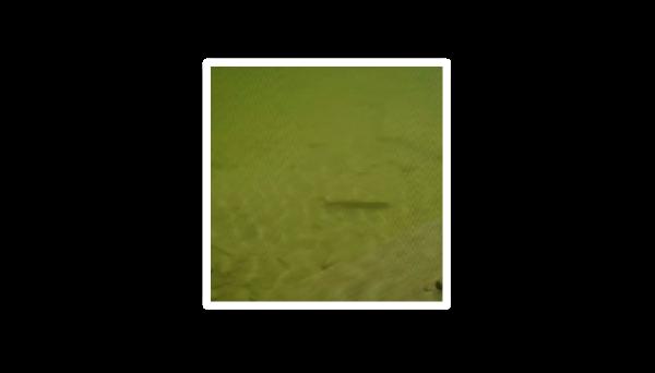 合民牌水体提质液WEI-SL型在某塘坑红色油污腥臭水体治理中的应用