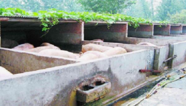 合民牌微生物生态液DEO-AF型在农业养殖场除臭中的应用