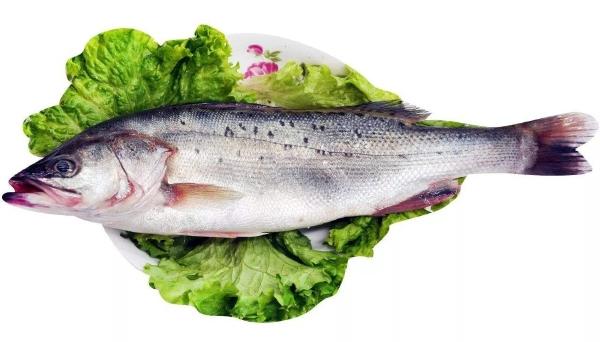 合民牌微生物水体提质液WEI-AC型在鲈鱼养殖中的应用